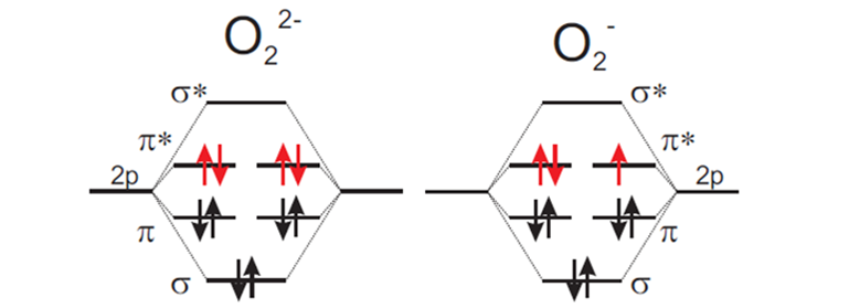 Figure 1: Molecular orbital energy scheme for paramagnetic superoxide (right) and diamagnetic peroxide (left) ions