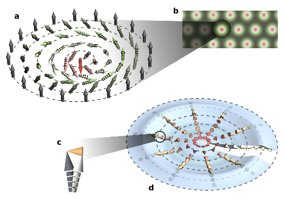Figure 1 - Spin textures in chiral helimagnets. Besides flat helices, chiral helimagnets like Cu2OSeO3 manifest radially symmetric topological solitons like (a) skyrmions or half- skyrmions. (b) Parallel skyrmions can form densely packed lattices in two spatial dimensions. (c) Quantitative first-principles calculations predict that the ferrimagnetic order in Cu2OSeO3 is locally altered by the multi-sublattice structure, leading to weak antiferromagnetism (depicted by orange arrowheads). (d) The skyrmion texture is locally composed of these three-dimensional canted spin patterns. Thus, the weak antiferromagnetic order itself is modulated along with the primary ferrimagnetic twisting shown in (a).