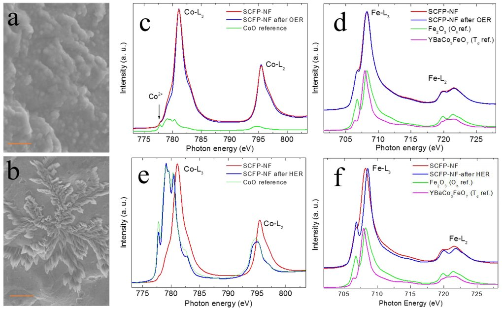 Figure 1. The SEM images of SCFP-NF after the OER (a) and HER (b) the scale bar are 200nm, and 1 μm, respectively. (c,e) the Co-L2,3 XAS before and after OER and HER and (d,f) the Fe-L2,3 XAS before and after OER and HER.