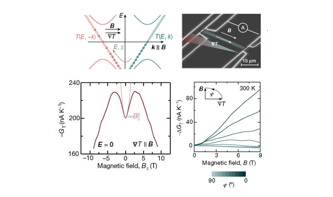 Topological materials have been essential to discover analogs of fermionic elementary particles and to test fundamental laws predicted in high-energy physics.  Considering the richness of physics that electrical transport in topological bulk materials have recently been provided, our group seeks to unravel thermal transport signatures of new emergent quantum phenomena in topological semimetals. Within the last three years, we have observed signatures of the mixed axial-gravitational anomaly in the Weyl semimetal NbP and of hydrodynamic electron flow at the Planckian bound of dissipation WP2.